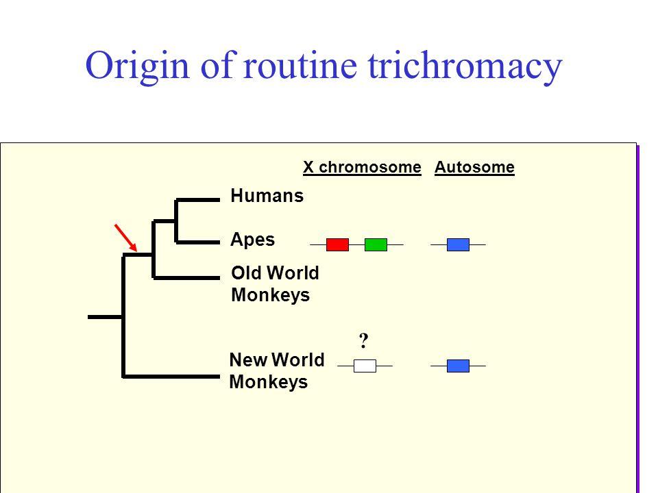Origin of routine trichromacy New World Monkeys Humans Apes Old World Monkeys X chromosomeAutosome ?