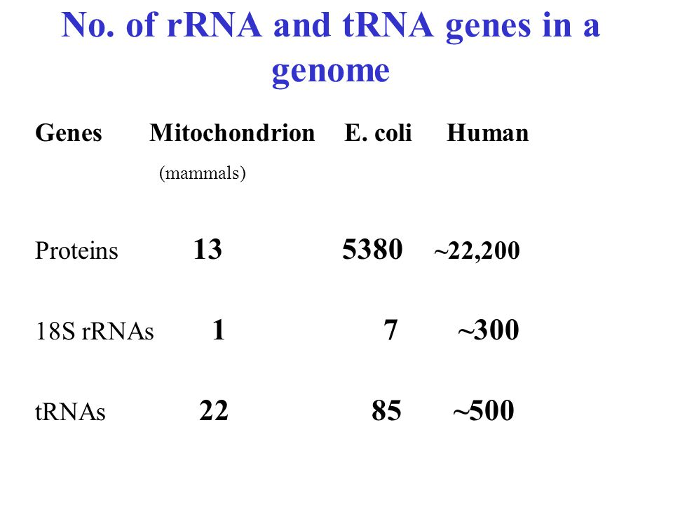 No. of rRNA and tRNA genes in a genome Genes Mitochondrion E.