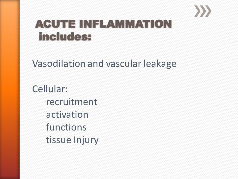 »Follows emigration and phagocytosis »Minimizes tissue injury