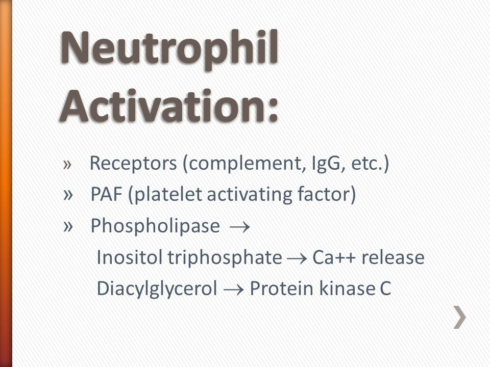 » Receptors (complement, IgG, etc.) » PAF (platelet activating factor) » Phospholipase  Inositol triphosphate  Ca++ release Diacylglycerol  Protein kinase C
