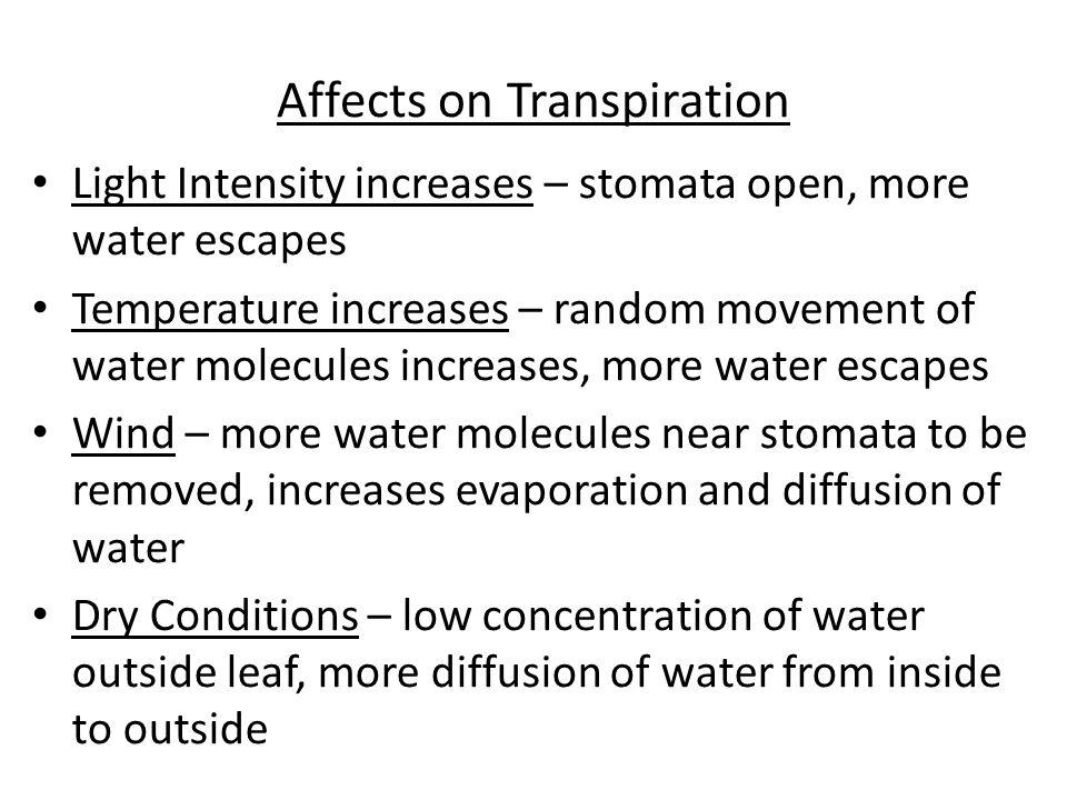 Affects on Transpiration Light Intensity increases – stomata open, more water escapes Temperature increases – random movement of water molecules incre