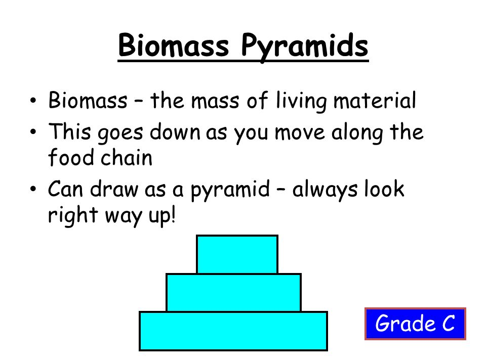 Biomass Pyramids Biomass – the mass of living material This goes down as you move along the food chain Can draw as a pyramid – always look right way u
