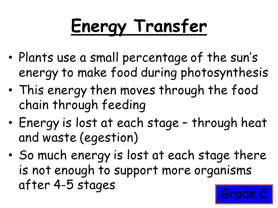 Energy Transfer Plants use a small percentage of the sun's energy to make food during photosynthesis This energy then moves through the food chain thr