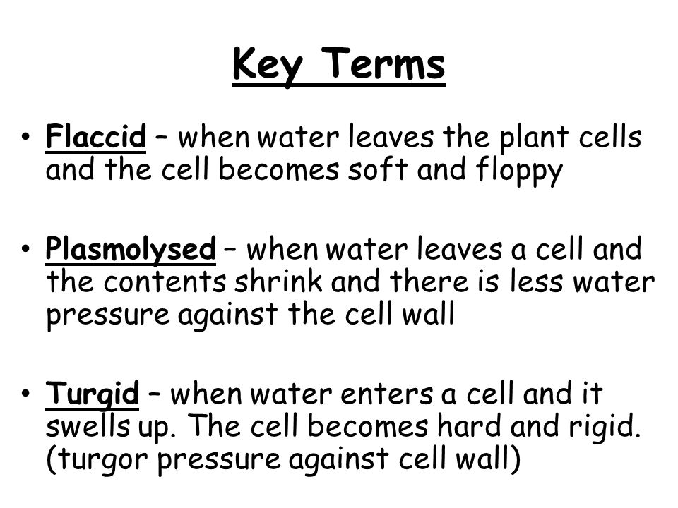 Key Terms Flaccid – when water leaves the plant cells and the cell becomes soft and floppy Plasmolysed – when water leaves a cell and the contents shr