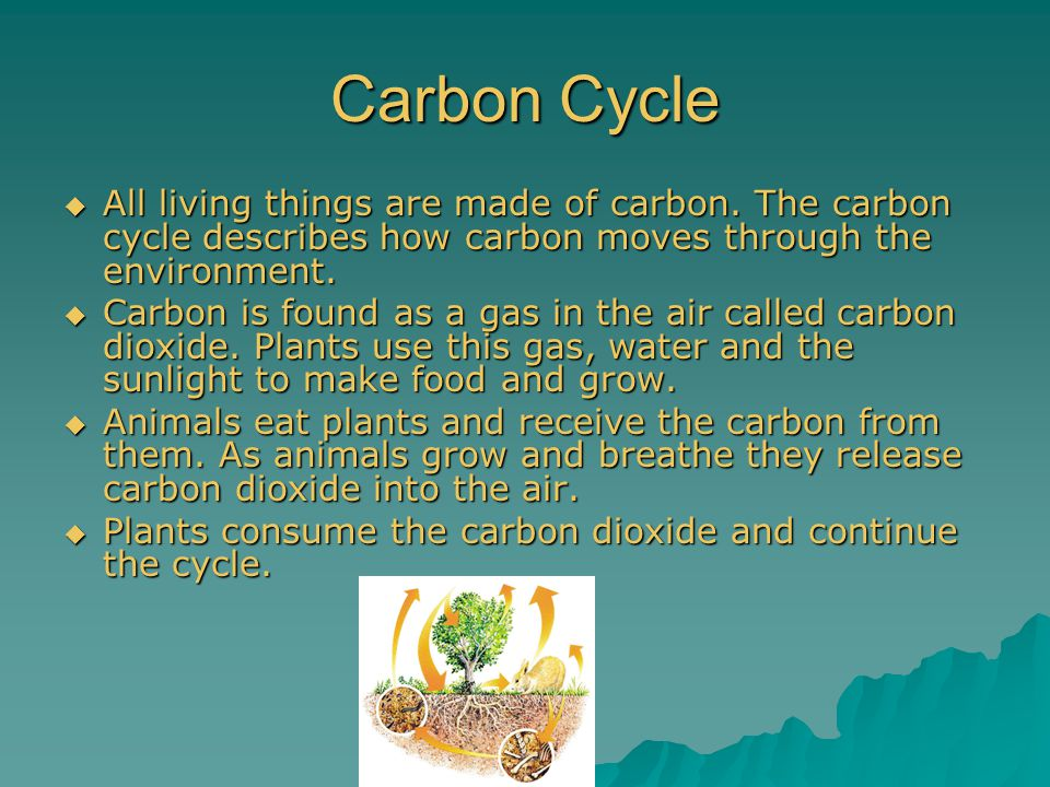 Carbon Cycle  All living things are made of carbon. The carbon cycle describes how carbon moves through the environment.  Carbon is found as a gas i