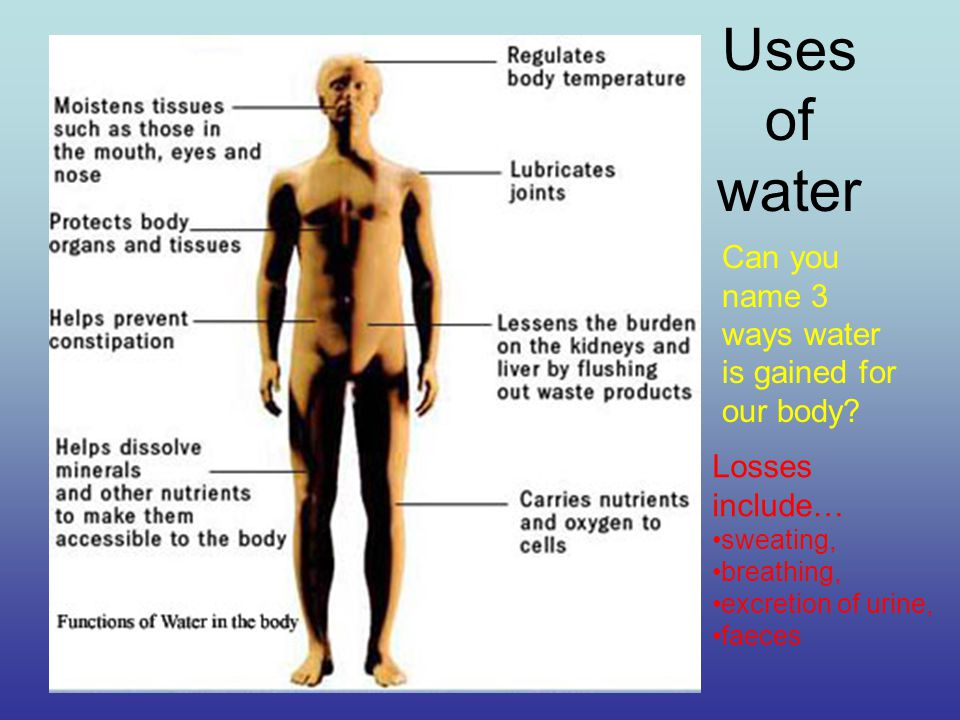 Uses of water Can you name 3 ways water is gained for our body.