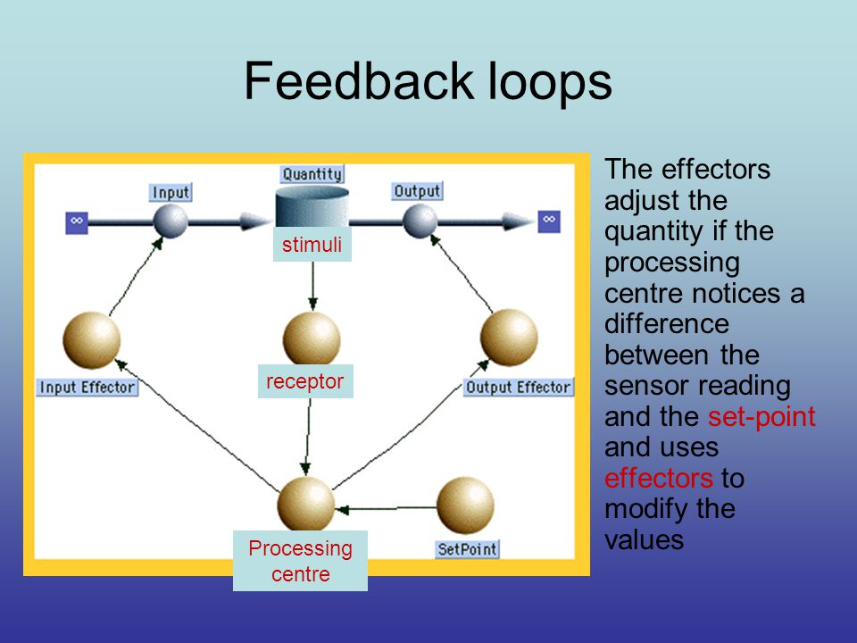 Feedback loops The effectors adjust the quantity if the processing centre notices a difference between the sensor reading and the set-point and uses effectors to modify the values Processing centre receptor stimuli
