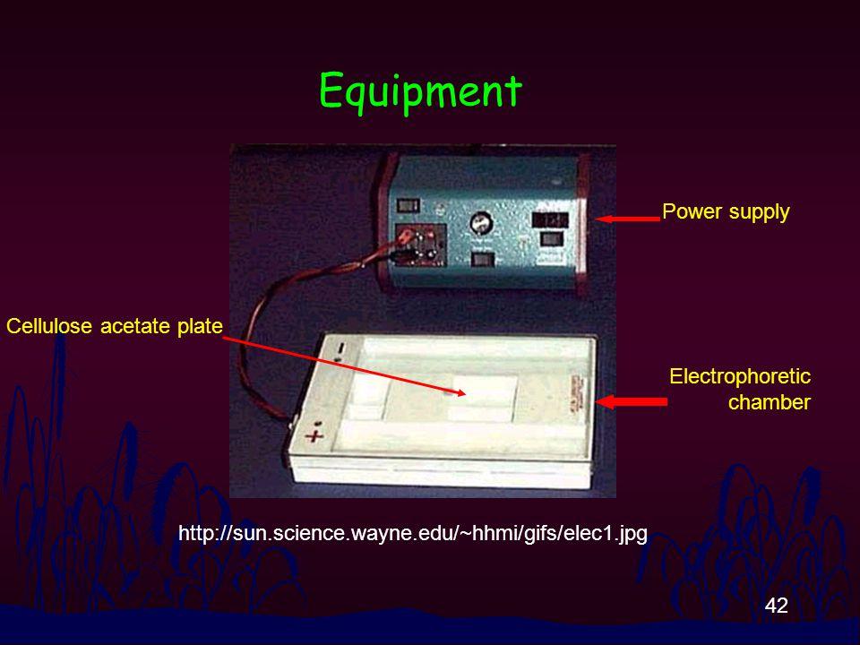 42 Equipment http://sun.science.wayne.edu/~hhmi/gifs/elec1.jpg Power supply Electrophoretic chamber Cellulose acetate plate
