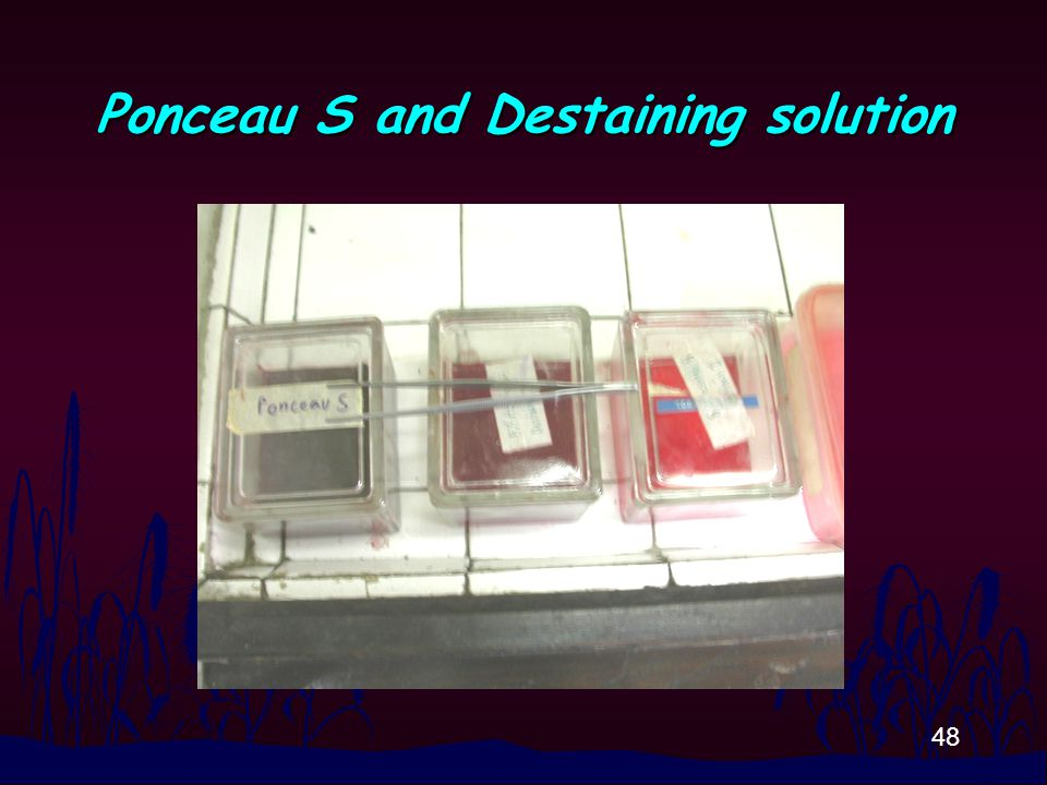 48 Ponceau S and Destaining solution