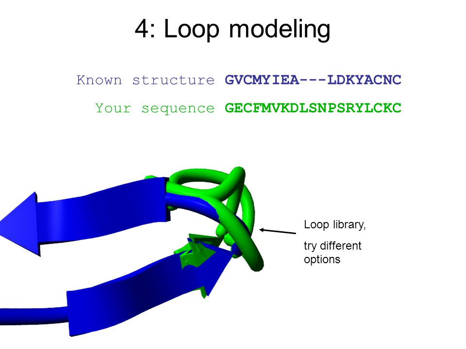 Known structure GVCMYIEA---LDKYACNC Your sequence GECFMVKDLSNPSRYLCKC Loop library, try different options