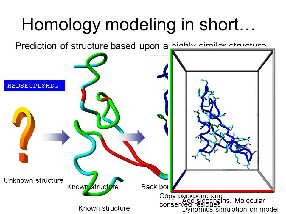 Homology modeling in short… Prediction of structure based upon a highly similar structure Add sidechains, Molecular Dynamics simulation on model Unkno