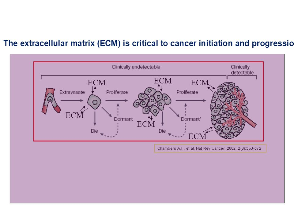 ECM Chambers A.F. et al. Nat Rev Cancer.