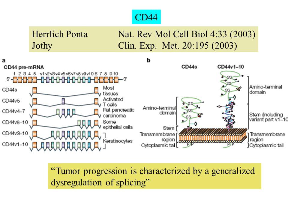"Herrlich Ponta Nat. Rev Mol Cell Biol 4:33 (2003) Jothy Clin. Exp. Met. 20:195 (2003) CD44 ""Tumor progression is characterized by a generalized dysreg"