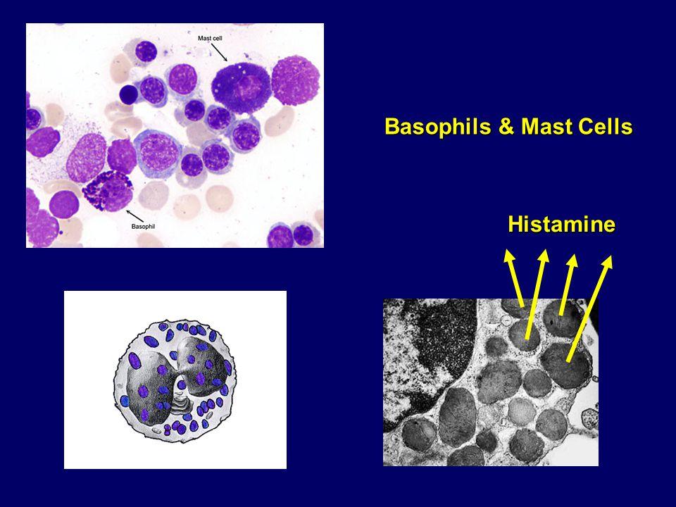 Basophils & Mast Cells Histamine