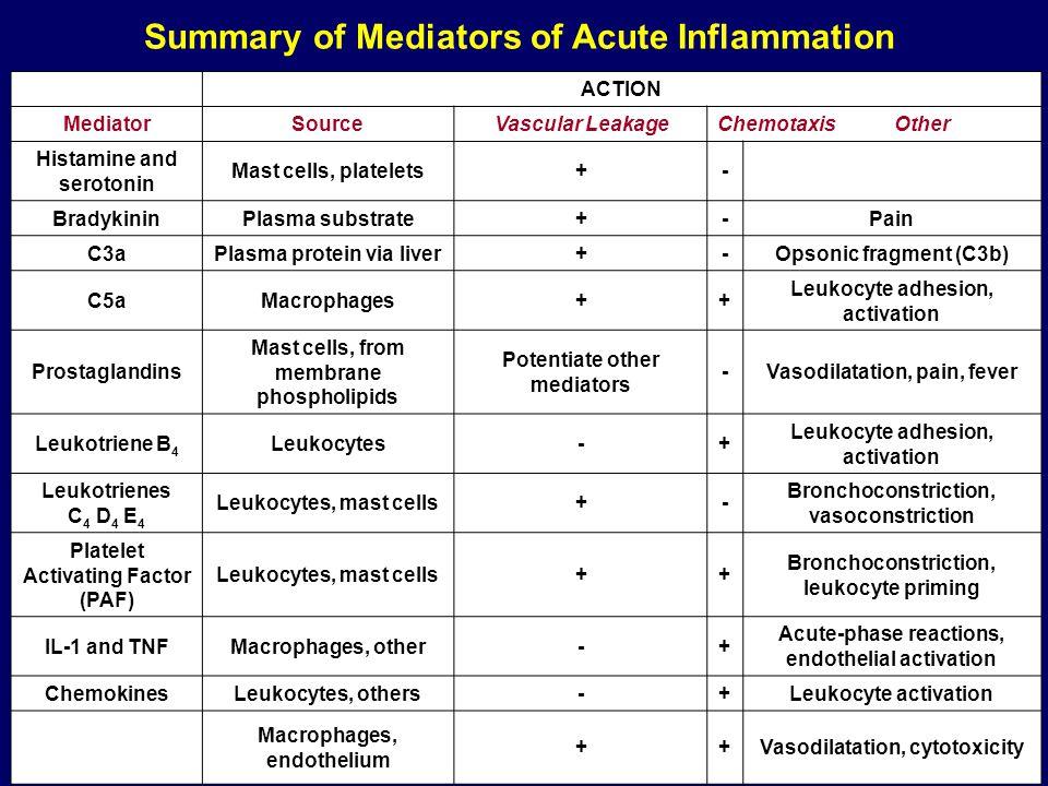 Summary of Mediators of Acute Inflammation ACTION MediatorSourceVascular LeakageChemotaxis Other Histamine and serotonin Mast cells, platelets+- Brady
