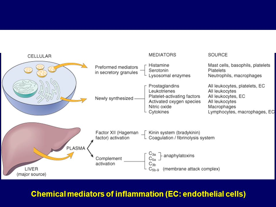 Chemical mediators of inflammation (EC: endothelial cells)