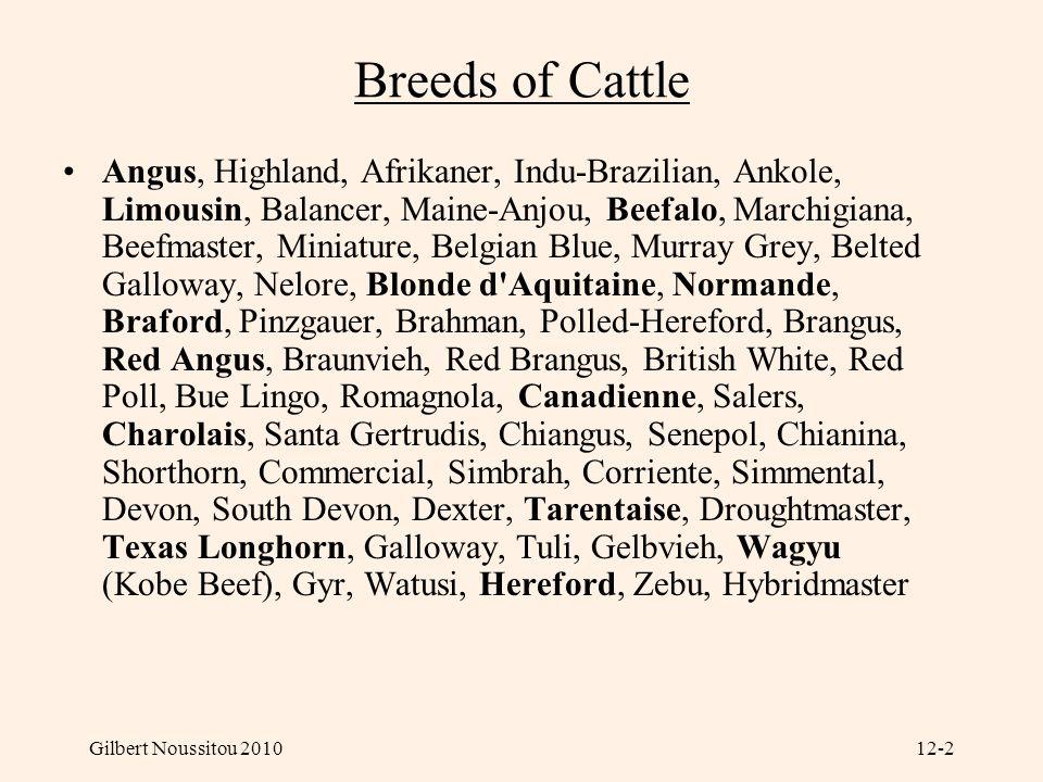 Gilbert Noussitou 201012-2 Breeds of Cattle Angus, Highland, Afrikaner, Indu-Brazilian, Ankole, Limousin, Balancer, Maine-Anjou, Beefalo, Marchigiana,