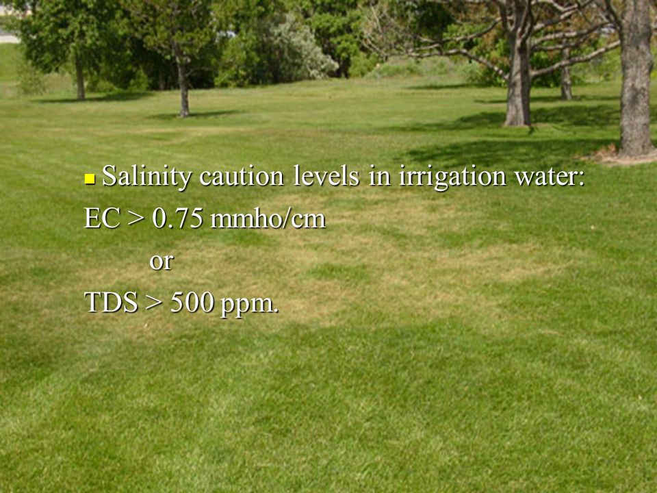 Turf Injury Salinity caution levels in irrigation water: Salinity caution levels in irrigation water: EC > 0.75 mmho/cm or TDS > 500 ppm.