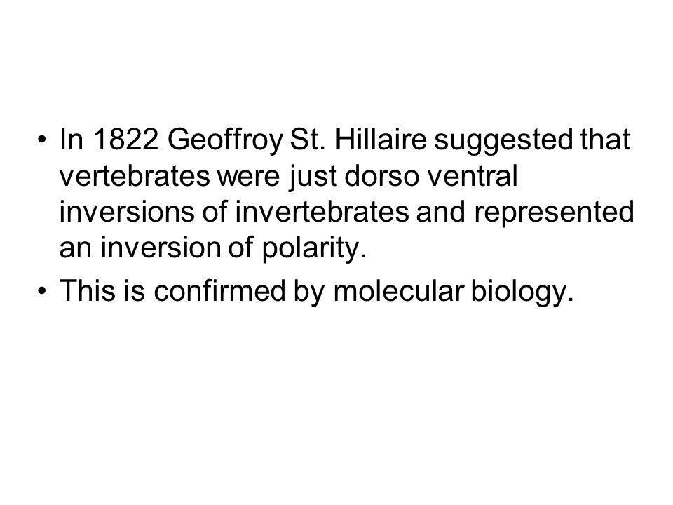 In 1822 Geoffroy St.