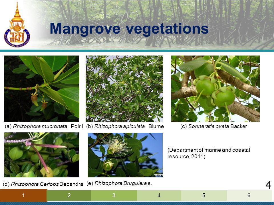 Mangrove vegetations 1 42635 (a) Rhizophora mucronata Poir I(b) Rhizophora apiculata Blume(c) Sonneratia ovata Backer (d) Rhizophora Ceriops Decandra