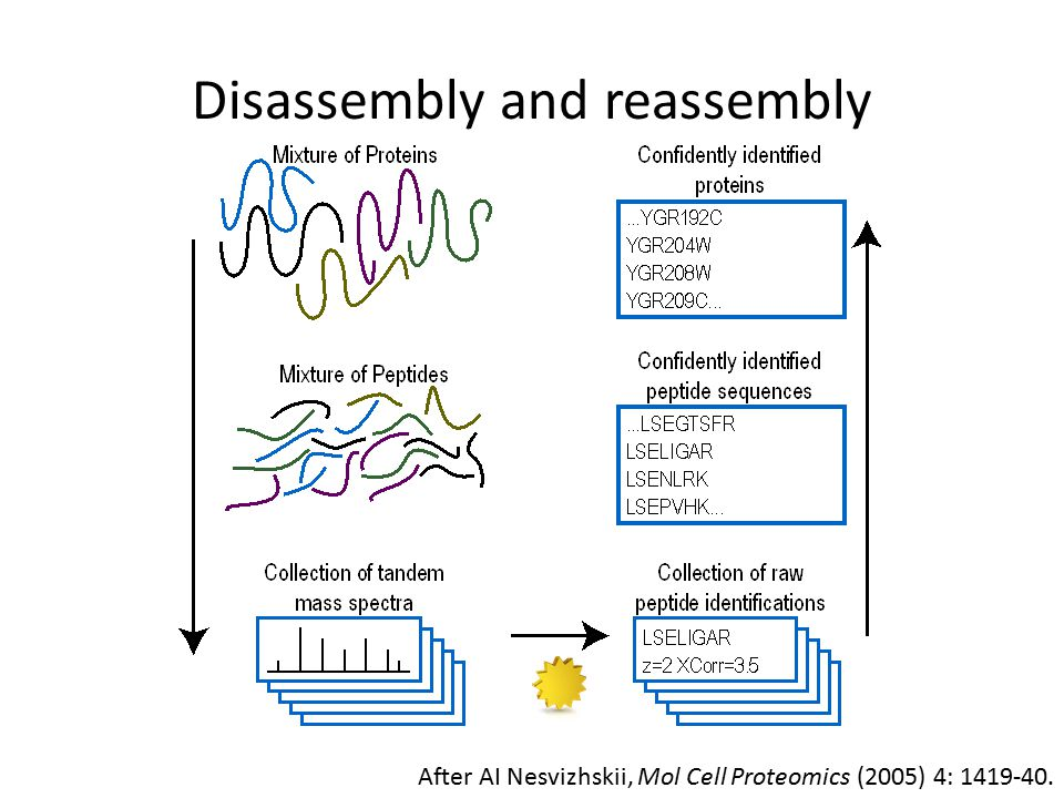 Disassembly and reassembly After AI Nesvizhskii, Mol Cell Proteomics (2005) 4: 1419-40.