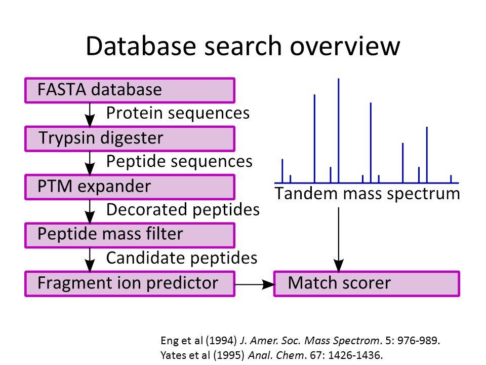 Database search overview Eng et al (1994) J. Amer.