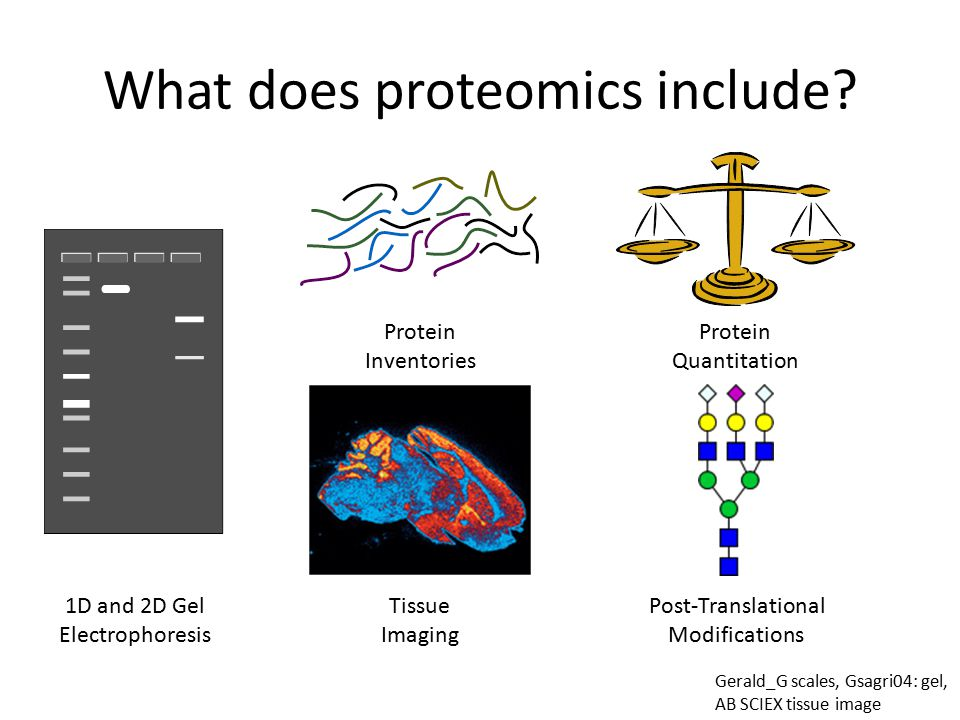 What does proteomics include.