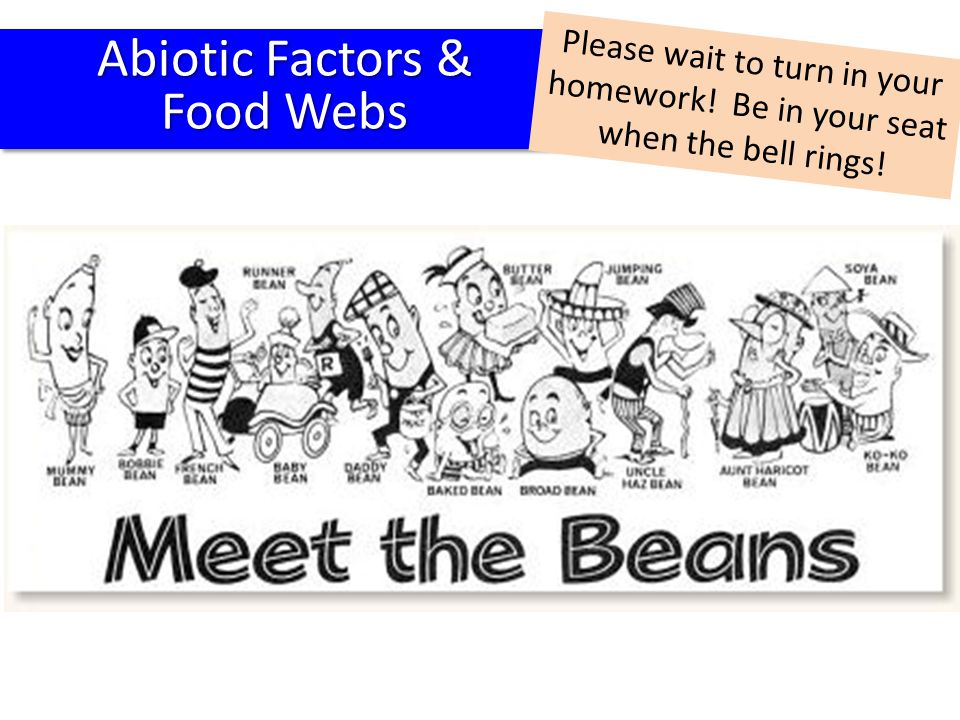 Abiotic Factors & Food Webs Abiotic Factors & Food Webs Please wait to turn in your homework! Be in your seat when the bell rings!