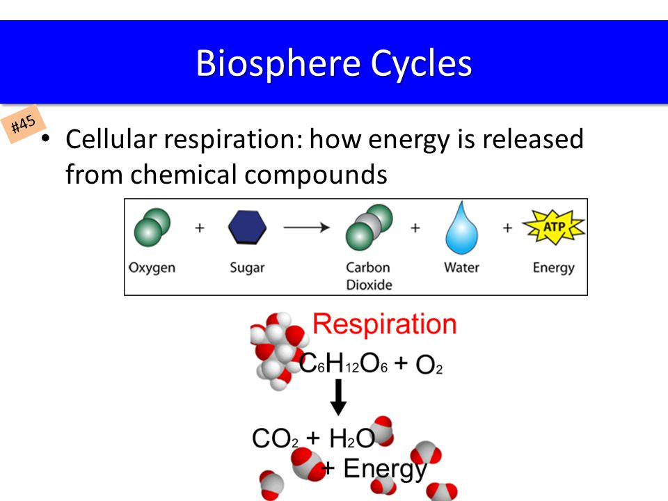Cellular respiration: how energy is released from chemical compounds Biosphere Cycles #45
