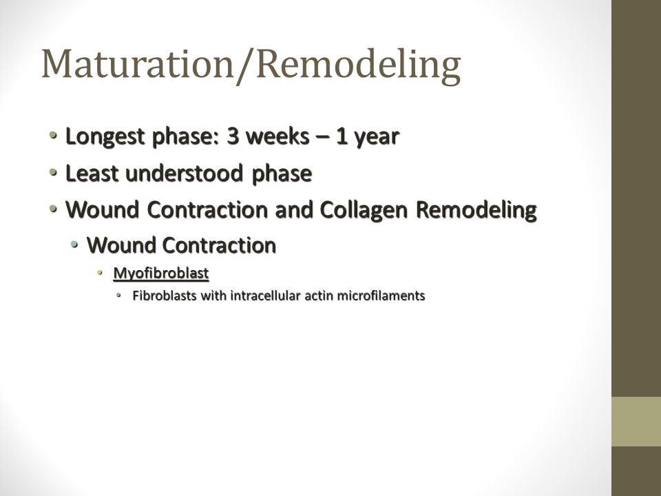 Maturation/Remodeling Longest phase: 3 weeks – 1 year Longest phase: 3 weeks – 1 year Least understood phase Least understood phase Wound Contraction