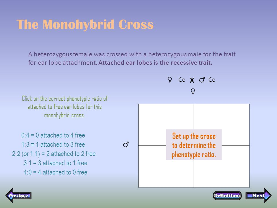The Monohybrid Cross