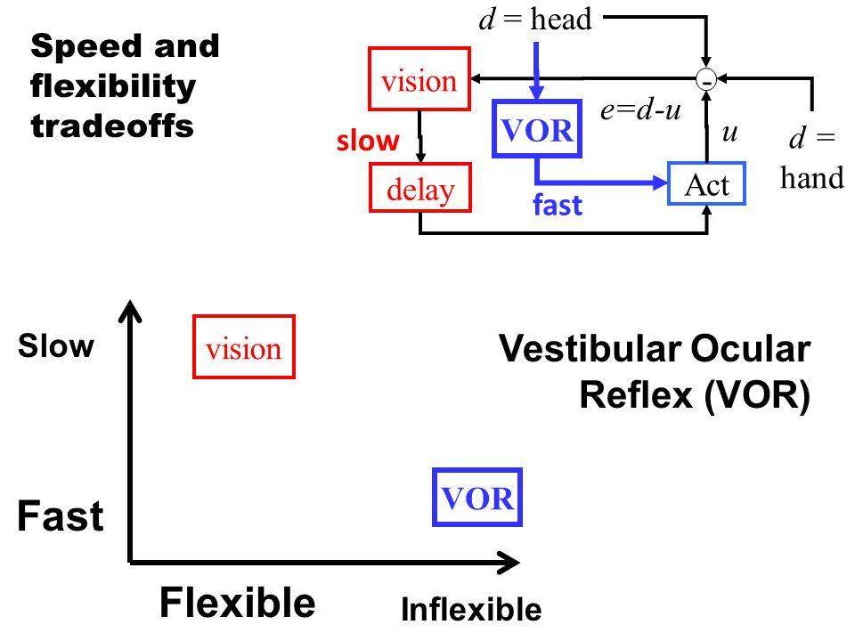 Fast Slow Flexible Inflexible VOR d = hand - vision d = head e=d-u Act u slow delay VOR fast vision Speed and flexibility tradeoffs Vestibular Ocular Reflex (VOR)