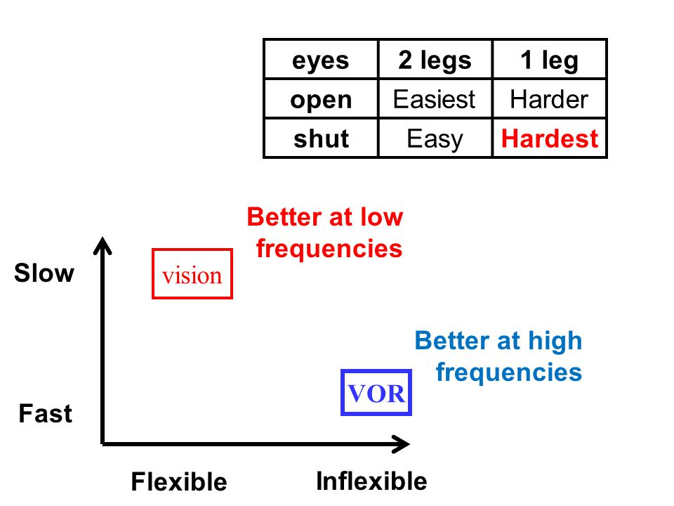eyes2 legs1 leg openEasiestHarder shutEasyHardest Fast Slow Flexible Inflexible VOR vision Better at low frequencies Better at high frequencies