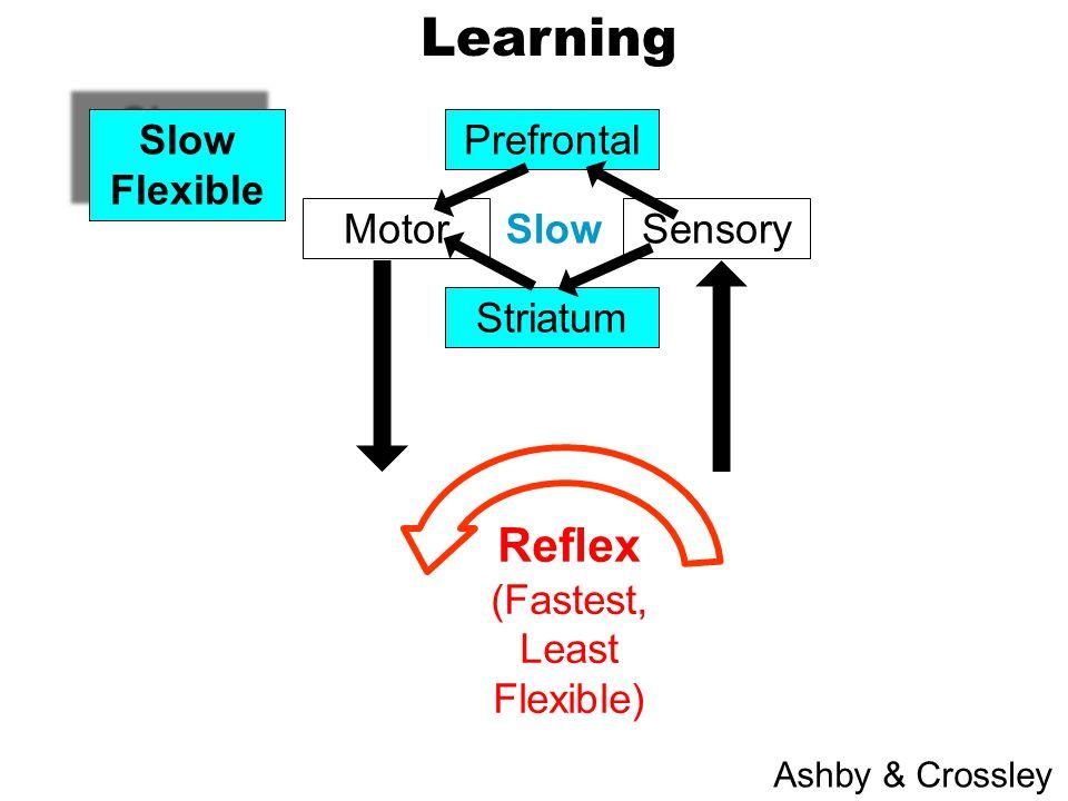 SensoryMotor Prefrontal Striatum Slow Flexible Slow Flexible Learning Ashby & Crossley Slow Reflex (Fastest, Least Flexible)