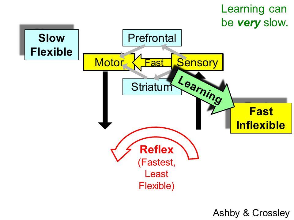 SensoryMotor Prefrontal Striatum Fast Inflexible Fast Inflexible Slow Flexible Slow Flexible Learning Reflex (Fastest, Least Flexible) Ashby & Crossley Learning can be very slow.