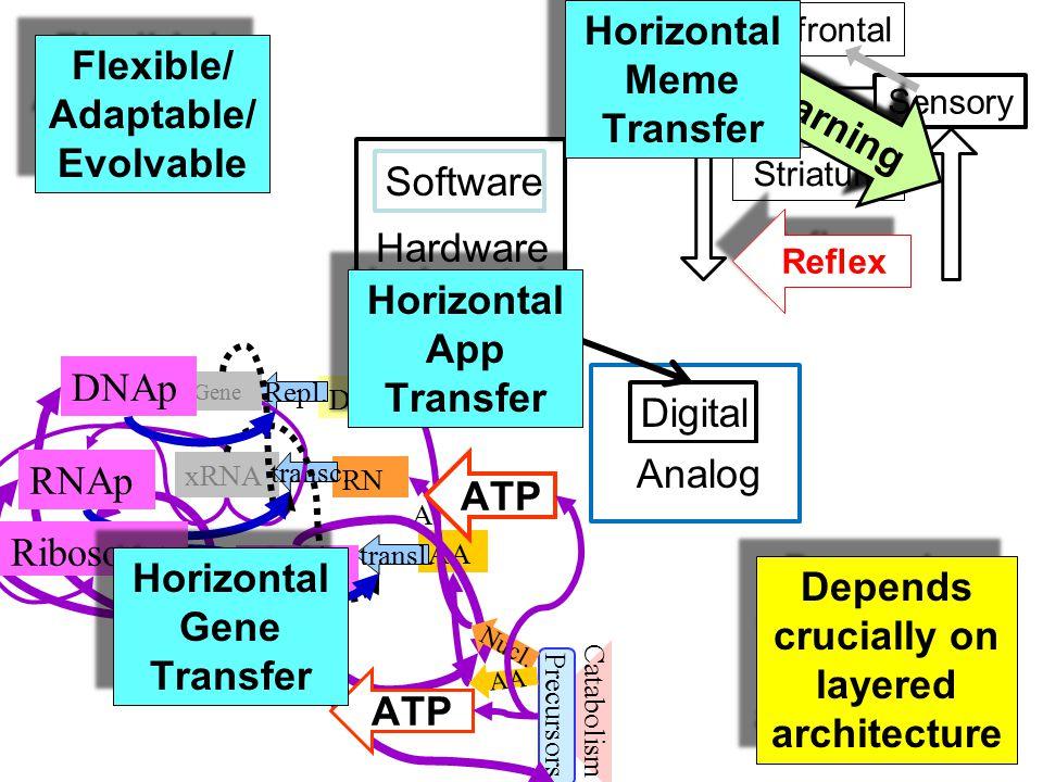 SensoryMotor Prefrontal Striatum Reflex Learning Catabolism AA RN A transl.