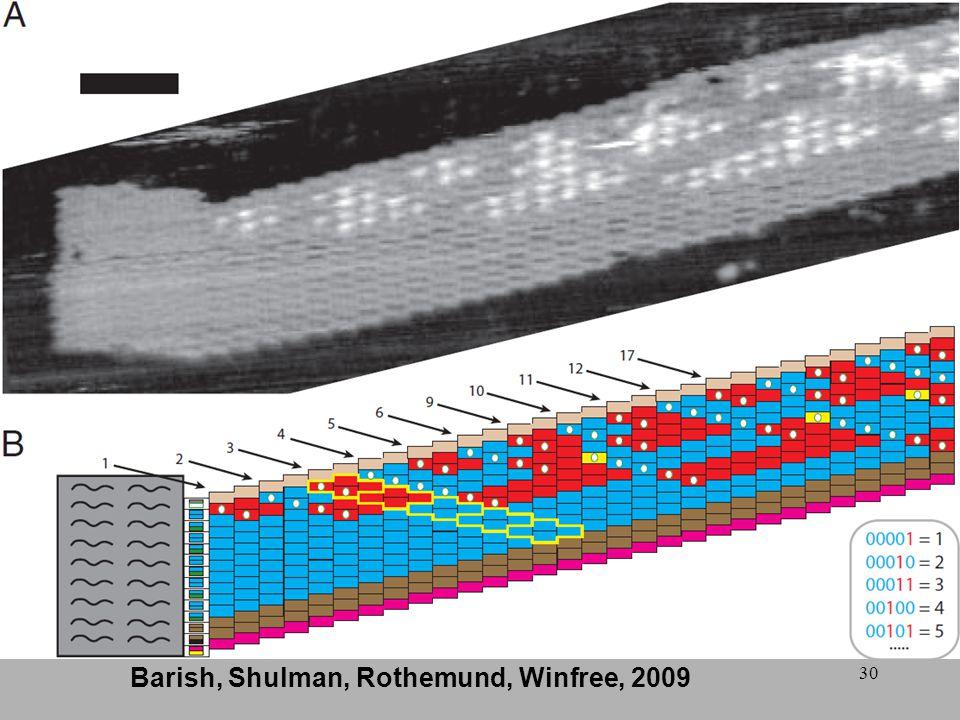 30 Barish, Shulman, Rothemund, Winfree, 2009