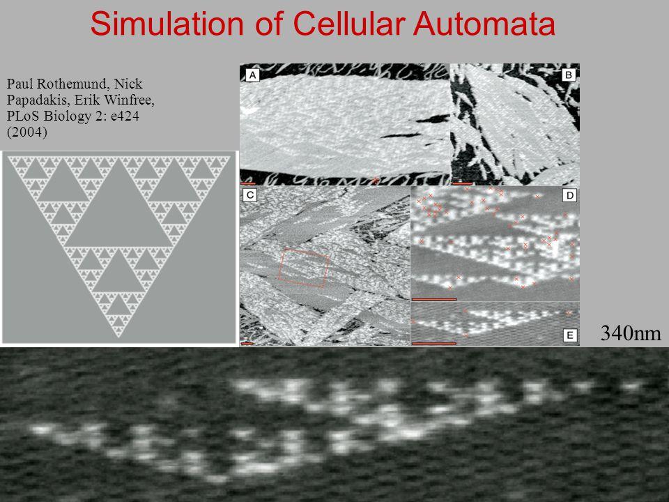 6 Paul Rothemund, Nick Papadakis, Erik Winfree, PLoS Biology 2: e424 (2004) 340nm Simulation of Cellular Automata