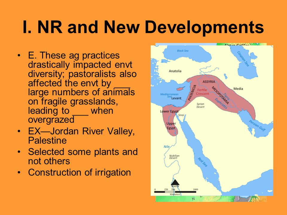 I. NR and New Developments E. These ag practices drastically impacted envt diversity; pastoralists also affected the envt by ___ large numbers of anim