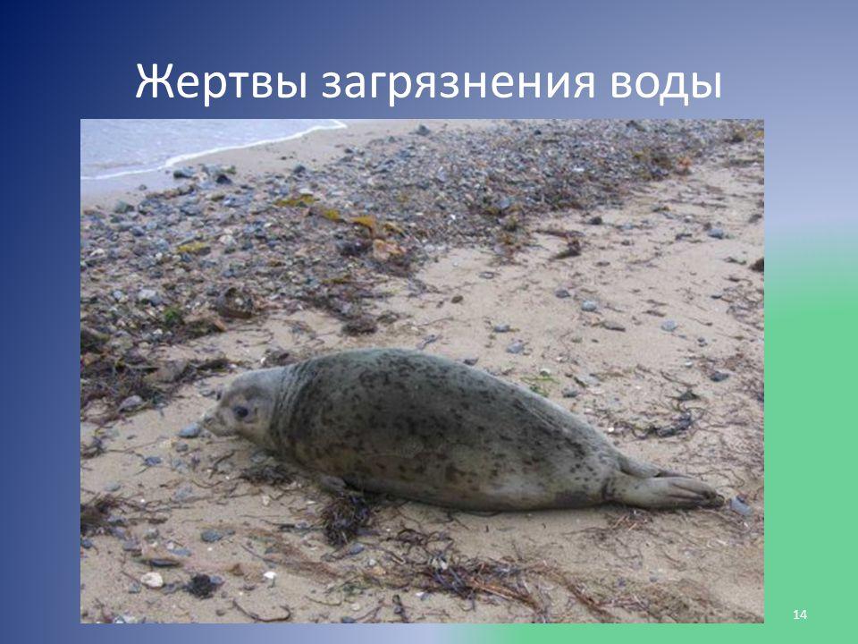 Жертвы загрязнения воды 14