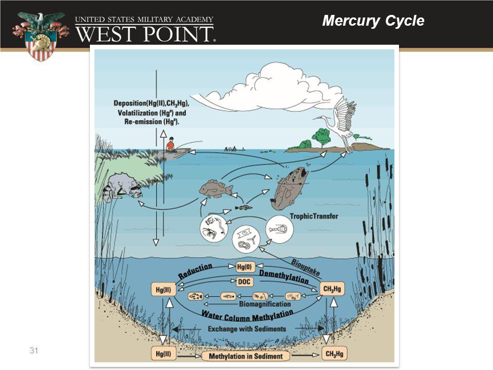 31 Mercury Cycle