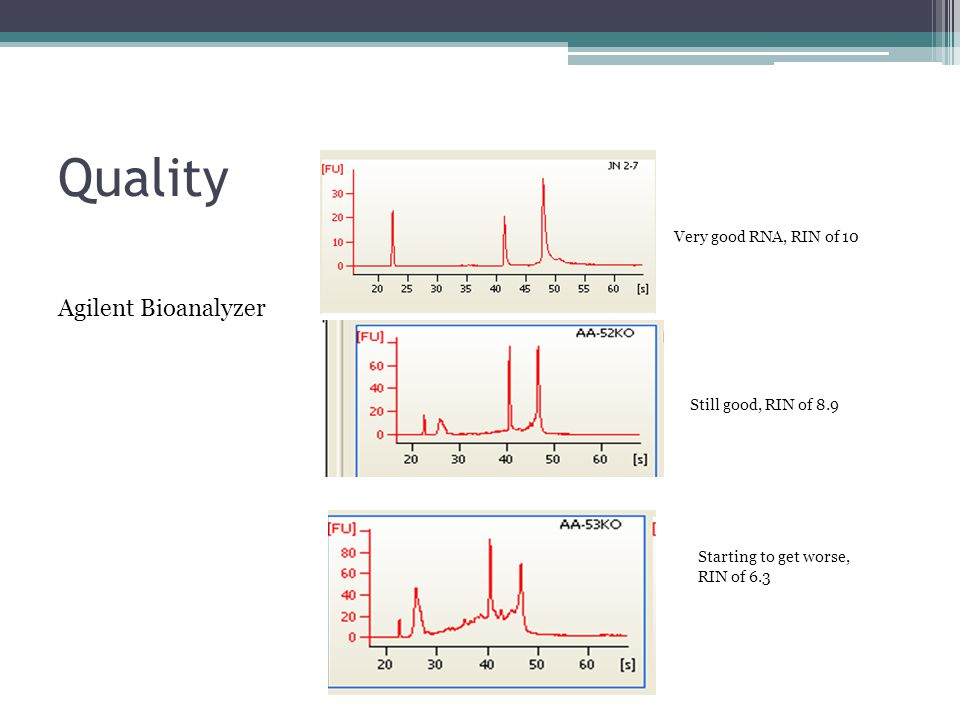 Quality Very good RNA, RIN of 10 Still good, RIN of 8.9 Starting to get worse, RIN of 6.3 Agilent Bioanalyzer
