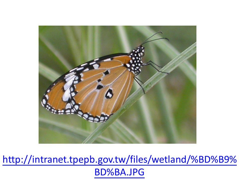 http://intranet.tpepb.gov.tw/files/wetland/%BD%B9% BD%BA.JPG