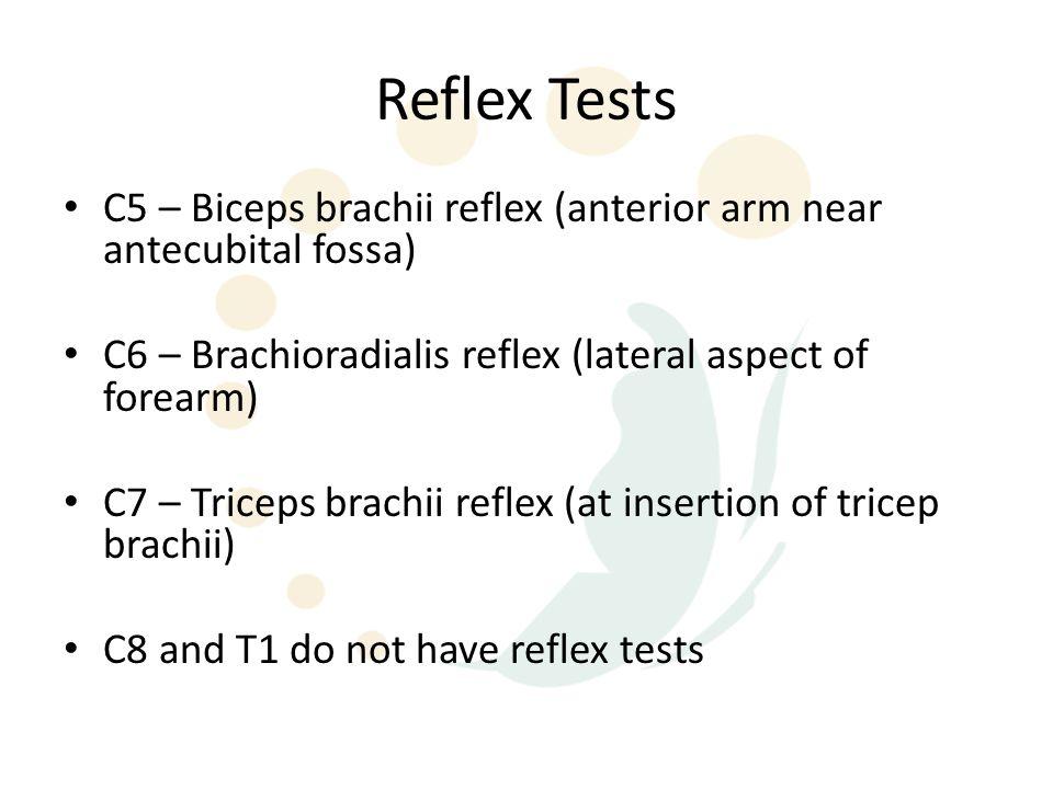 Reflex Tests C5 – Biceps brachii reflex (anterior arm near antecubital fossa) C6 – Brachioradialis reflex (lateral aspect of forearm) C7 – Triceps brachii reflex (at insertion of tricep brachii) C8 and T1 do not have reflex tests