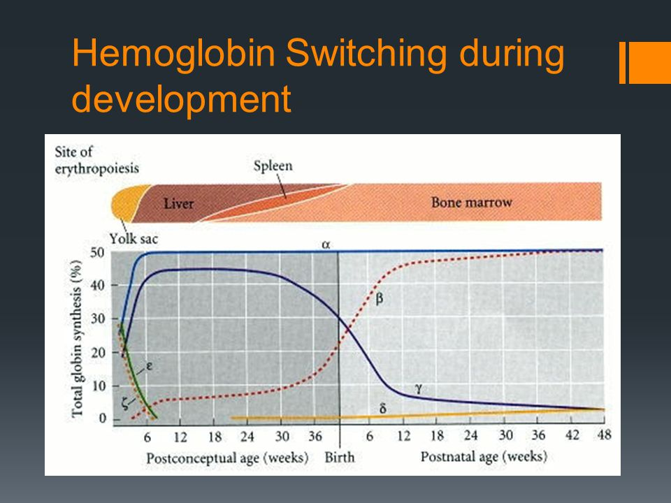 Hemoglobin Switching during development