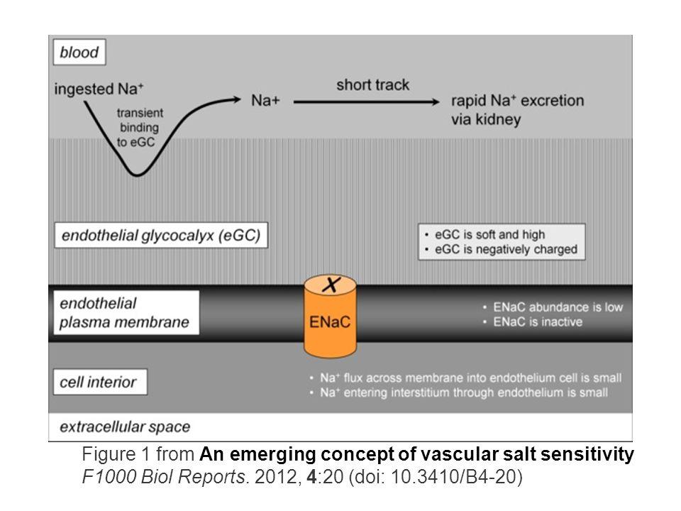 Figure 1 from An emerging concept of vascular salt sensitivity F1000 Biol Reports.