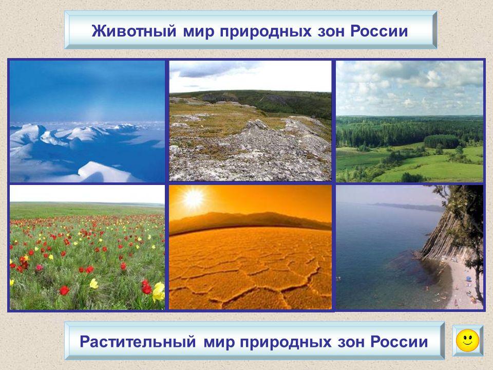 Животный мир природных зон России Растительный мир природных зон России