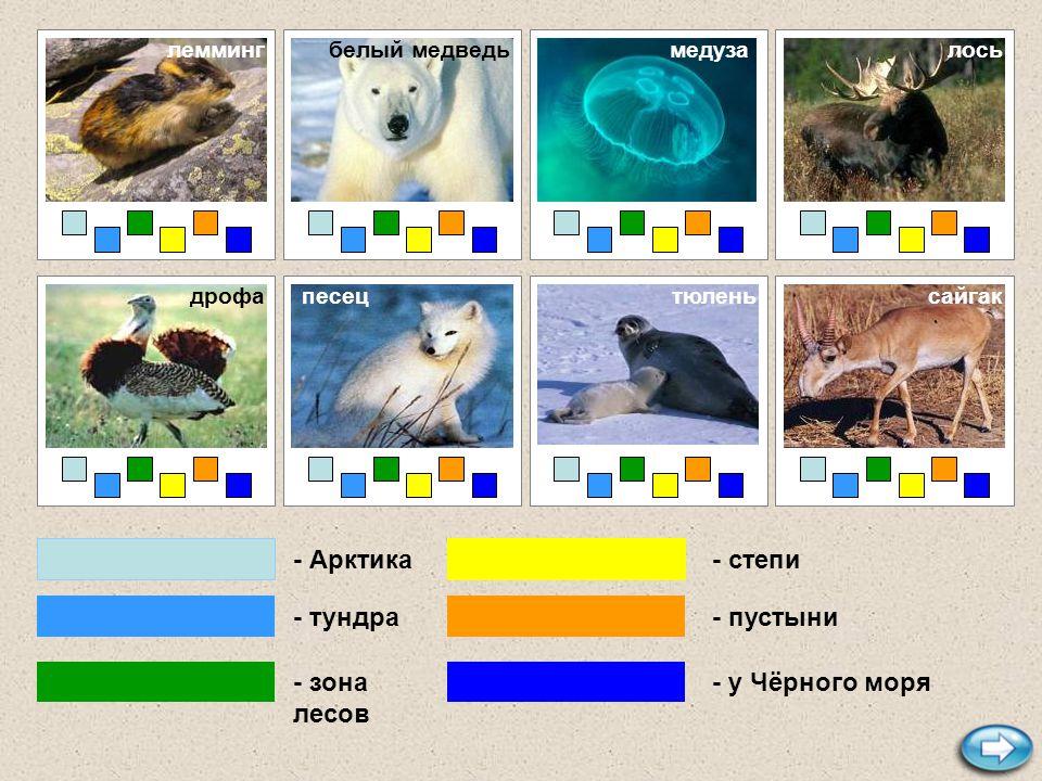 - Арктика - тундра - зона лесов - степи - пустыни - у Чёрного моря верблюд моржтупик полярная сова гадюка летягасеверный олень гагарка