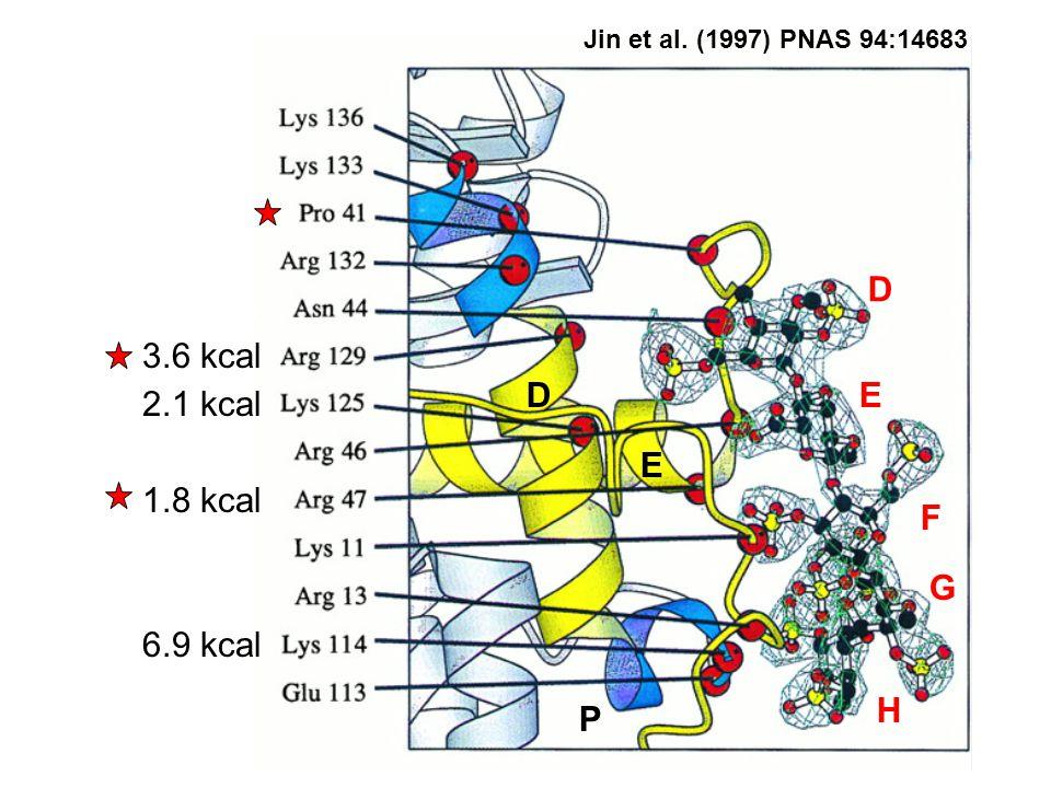 D E P D E F G H 6.9 kcal 1.8 kcal 3.6 kcal 2.1 kcal Jin et al. (1997) PNAS 94:14683