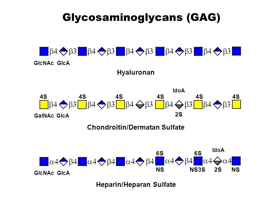 GlcNAcGlcA   Hyaluronan GalNAcGlcA   4S 2S IdoA Chondroitin/Dermatan Sulfate     6S NSNS3S2SNS  GlcN